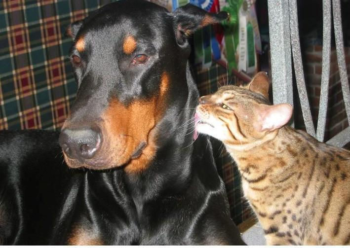 SORRY I CAN'T BE YOUR TOYGER