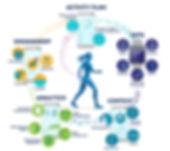 ARDA-StepHealth-InfoSnack-graphic.jpg