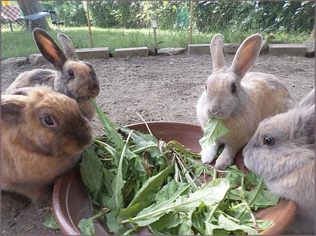 Info pratique lapins exemples d 39 habitats for Exterieur habitat 85