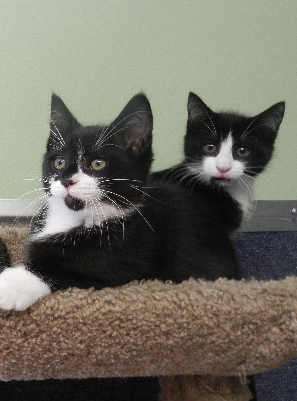 riversiderescue ry black nosed kitten