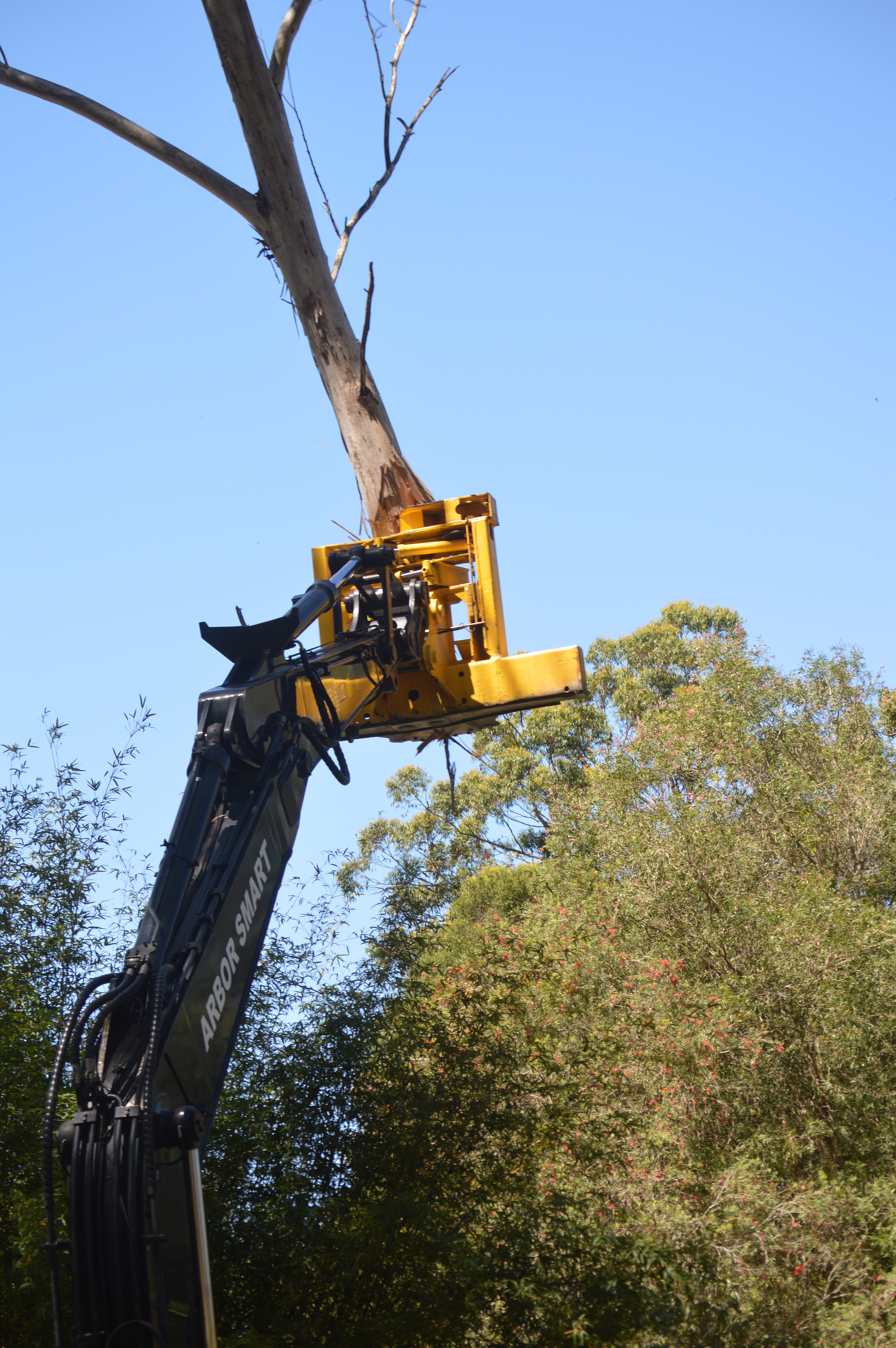 Image result for tree lopping