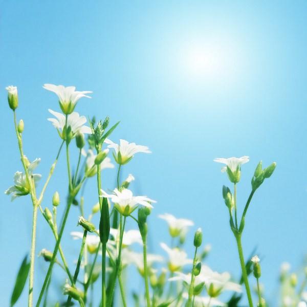 Цветы_146