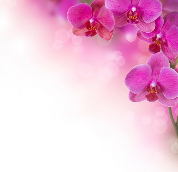 Цветы_250