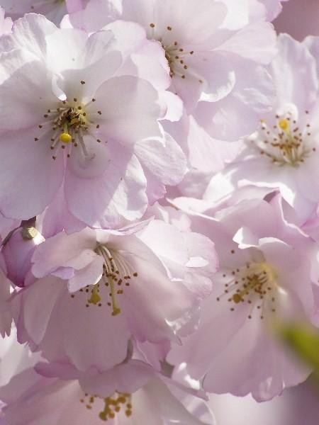 Цветы_216