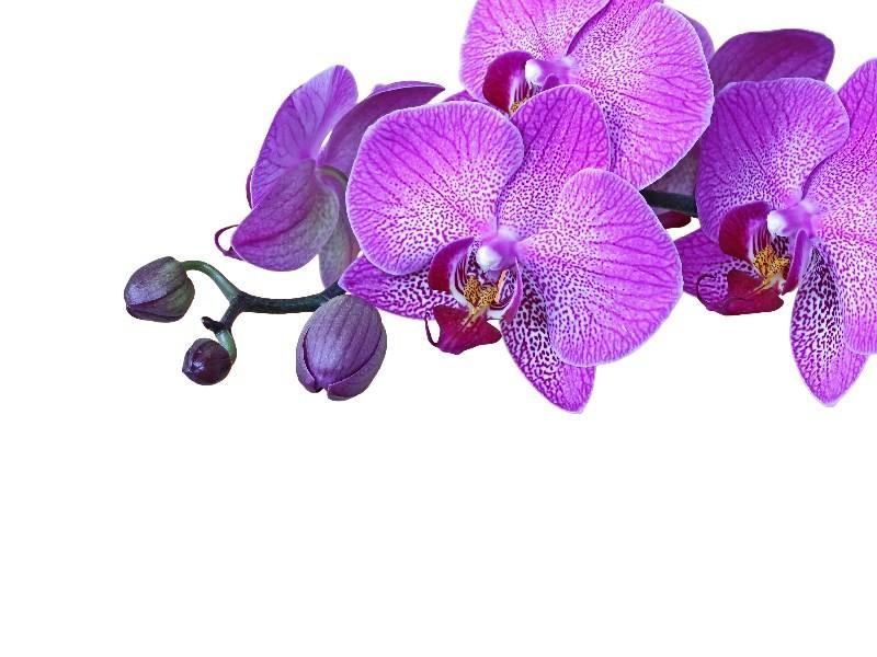 Цветы_259