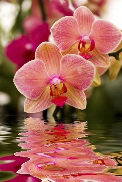 Цветы_027