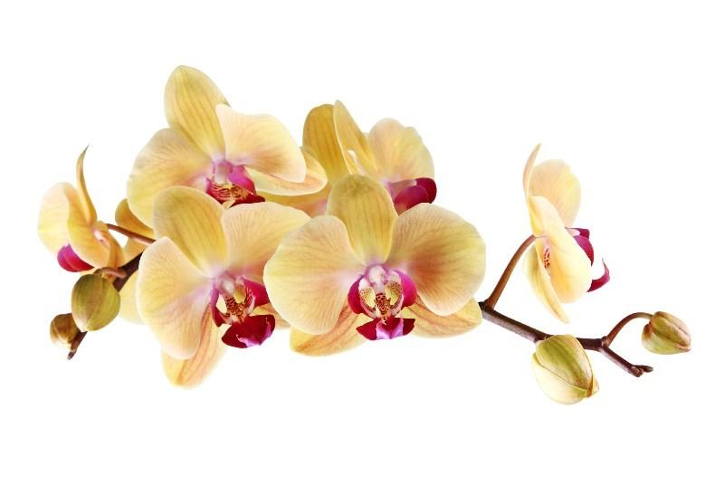 Цветы_229