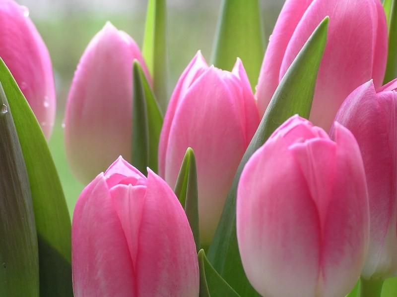 Цветы_187