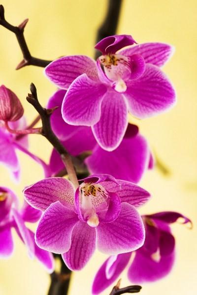 Цветы_086
