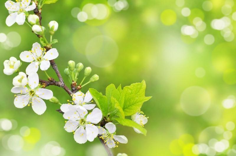 Цветы_153