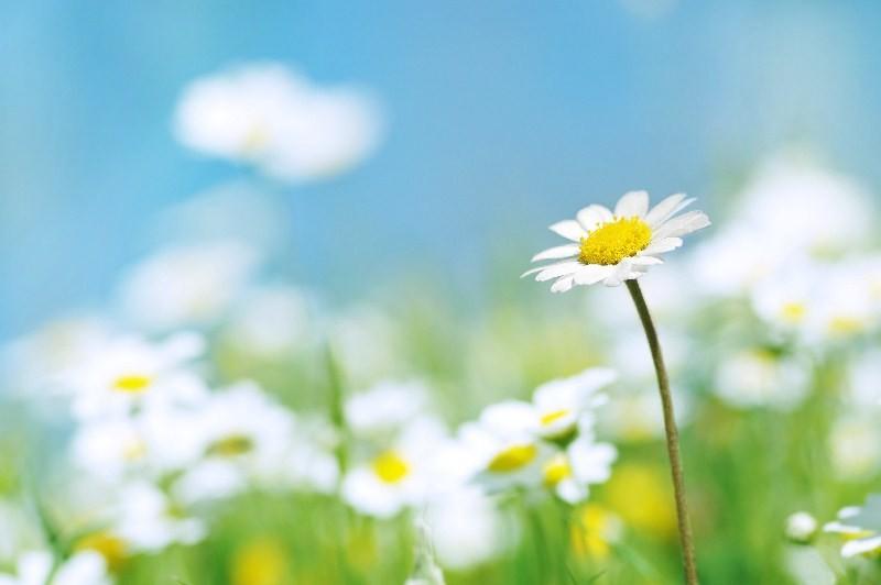 Цветы_195