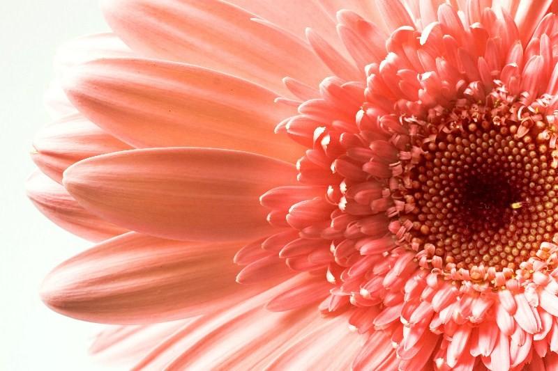 Цветы_073