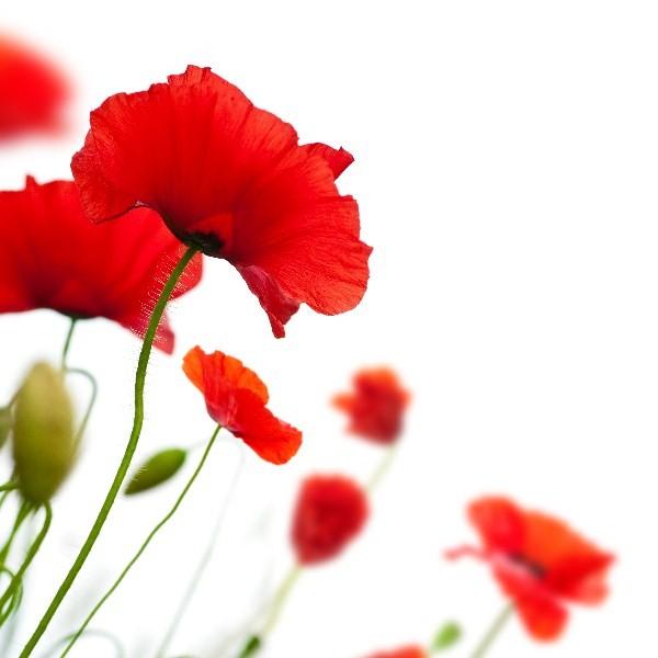 Цветы_099