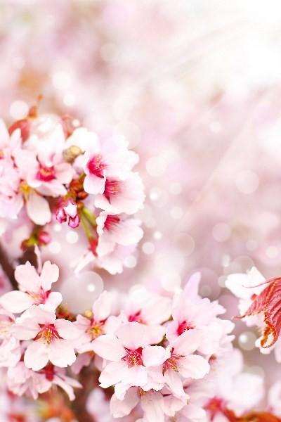 Цветы_244