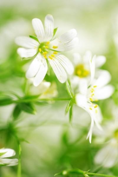 Цветы_011