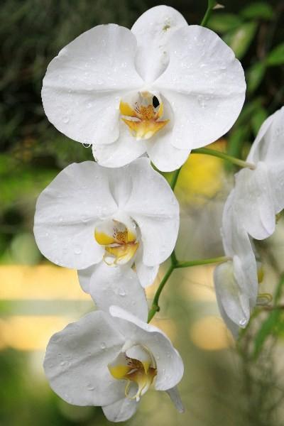 Цветы_034