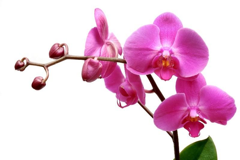 Цветы_008