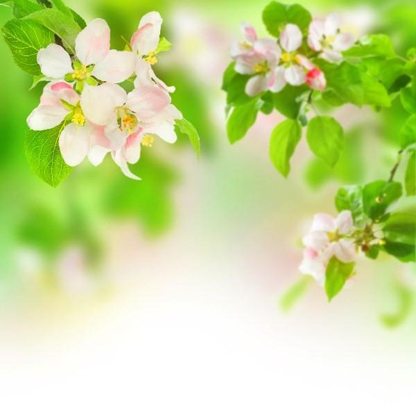 Цветы_050