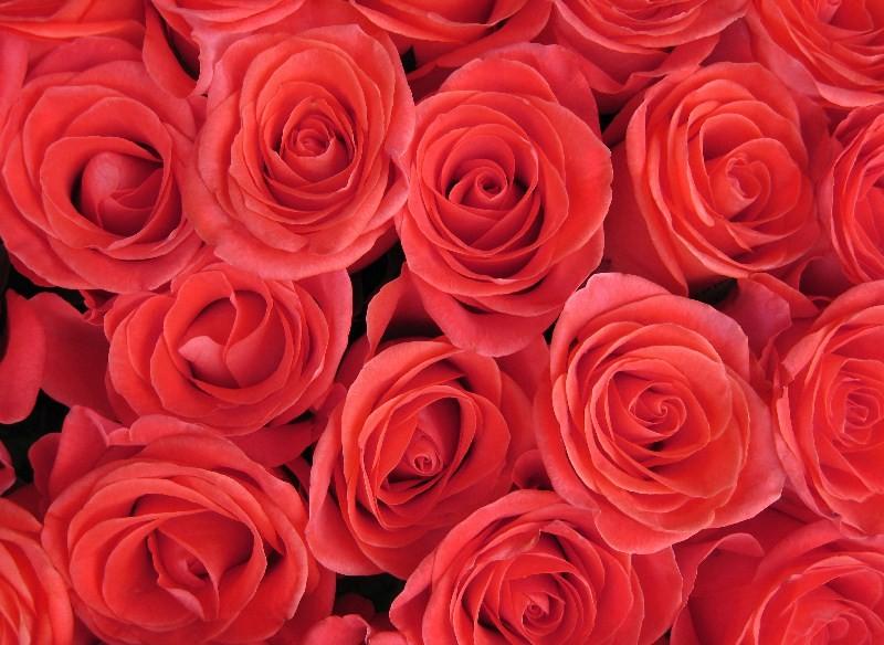 Цветы_084