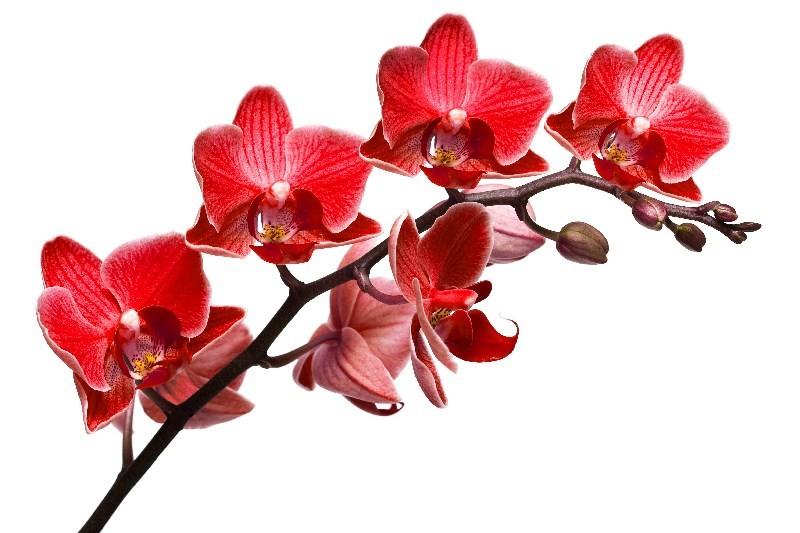 Цветы_140