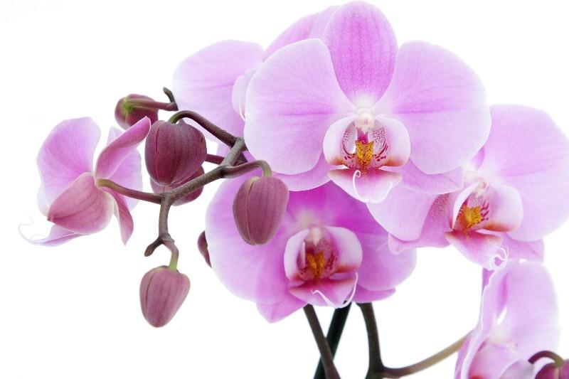 Цветы_026