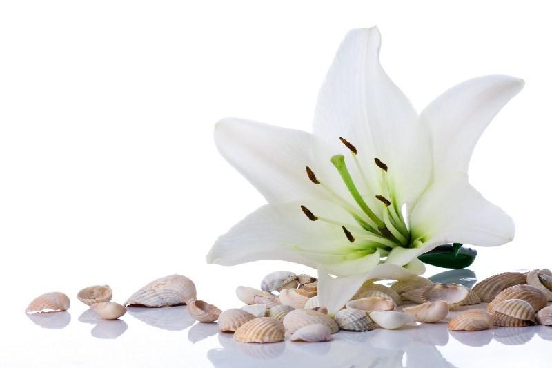 Цветы_013