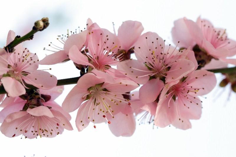 Цветы_029