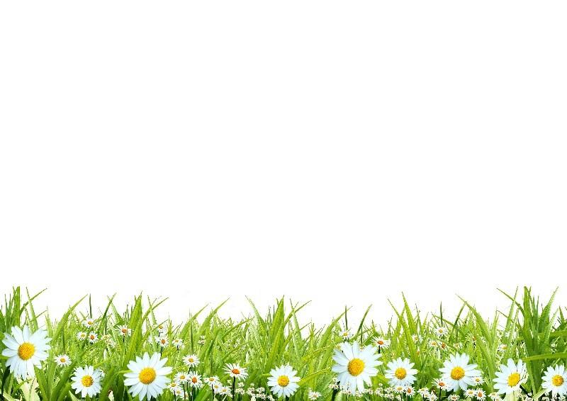 Цветы_148