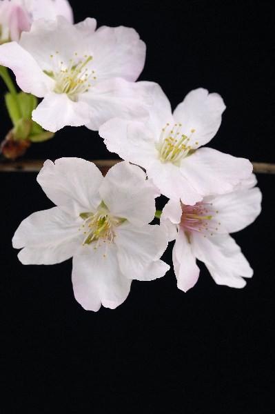 Цветы_152