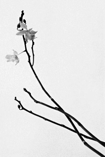 Цветы_063