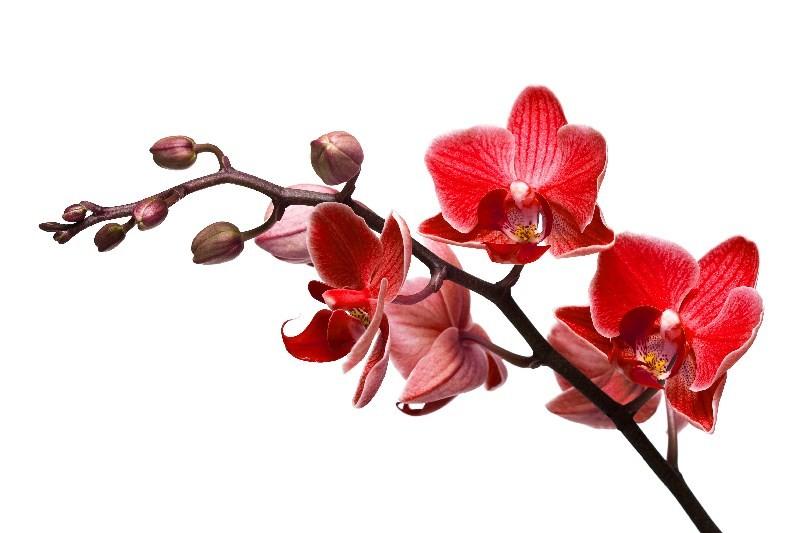 Цветы_069