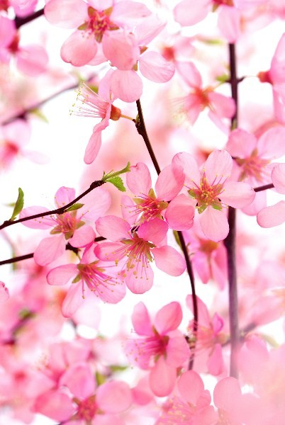 Цветы_065