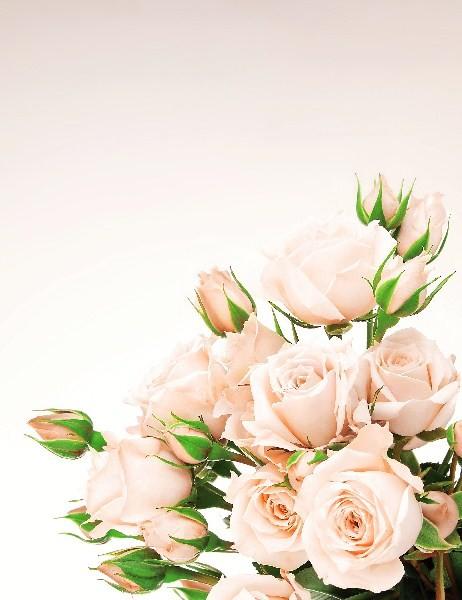 Цветы_147