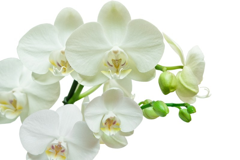 Цветы_249