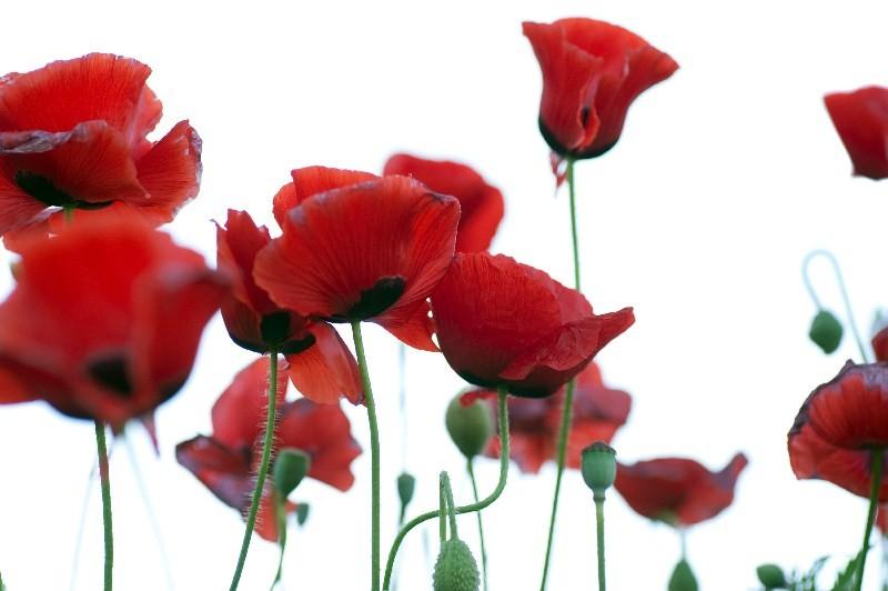 Цветы_219