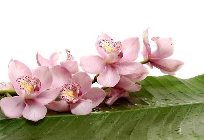 Цветы_239