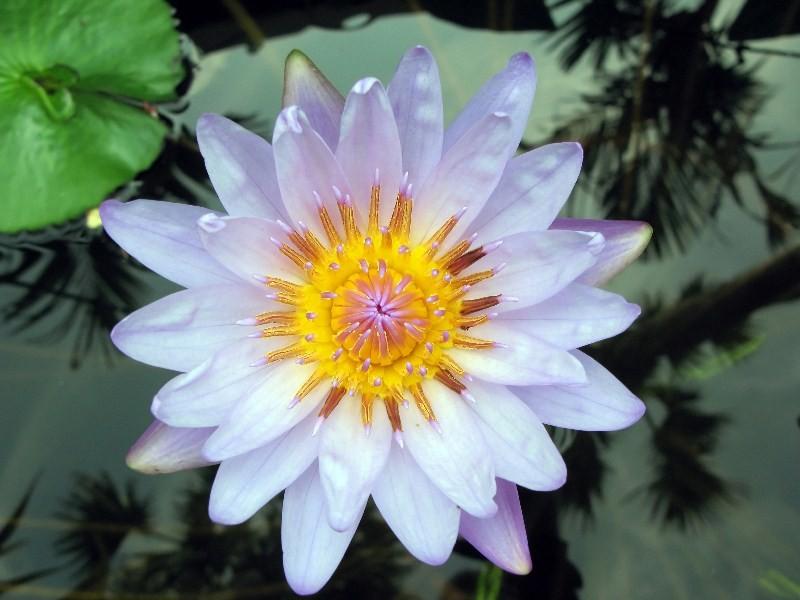 Цветы_025