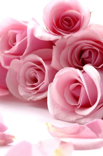 Цветы_082