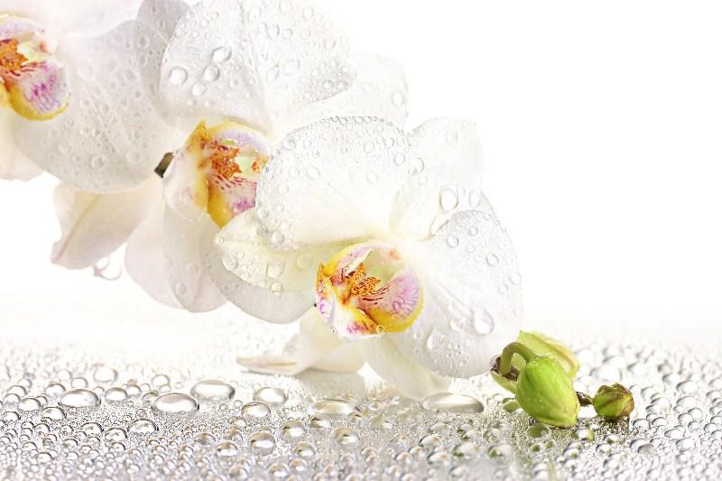Цветы_264