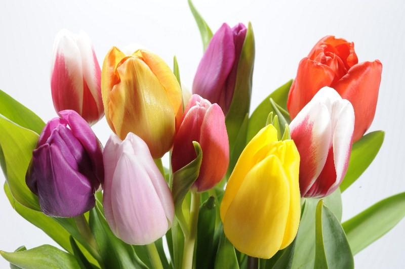 Цветы_090