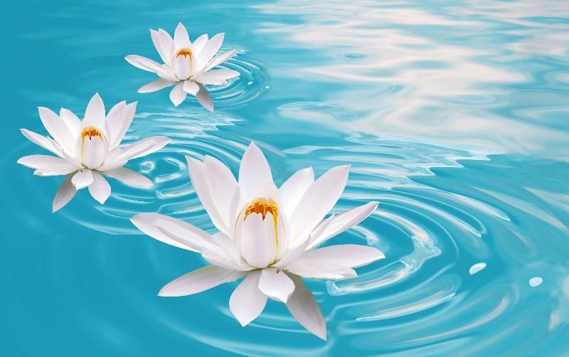 Цветы_194