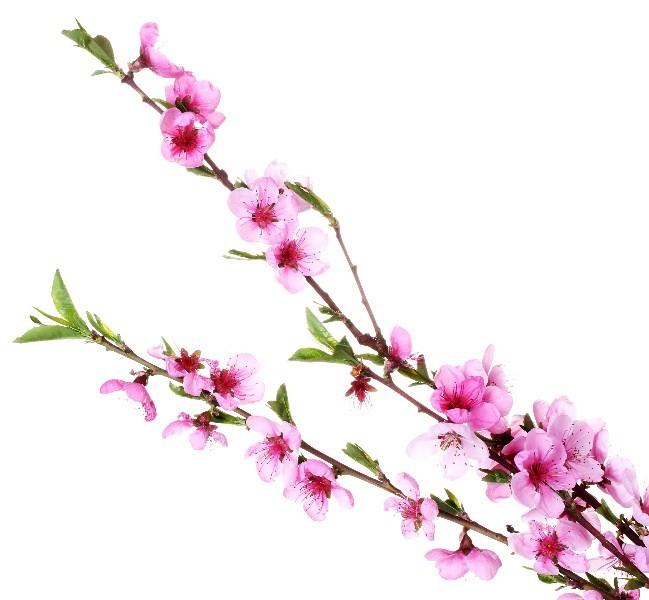 Цветы_256