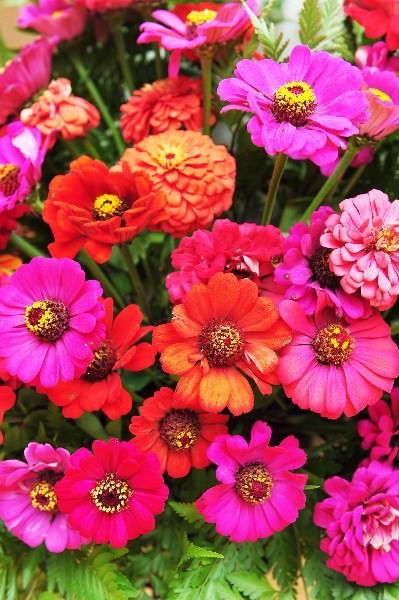 Цветы_241