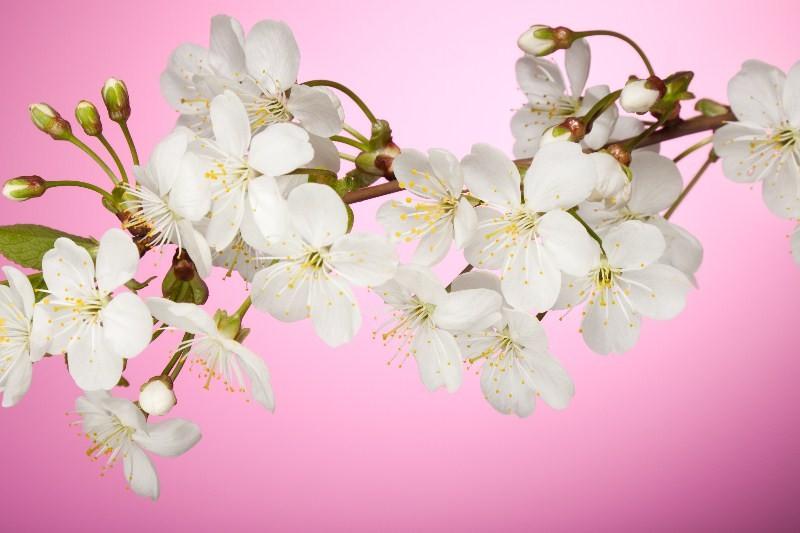 Цветы_170