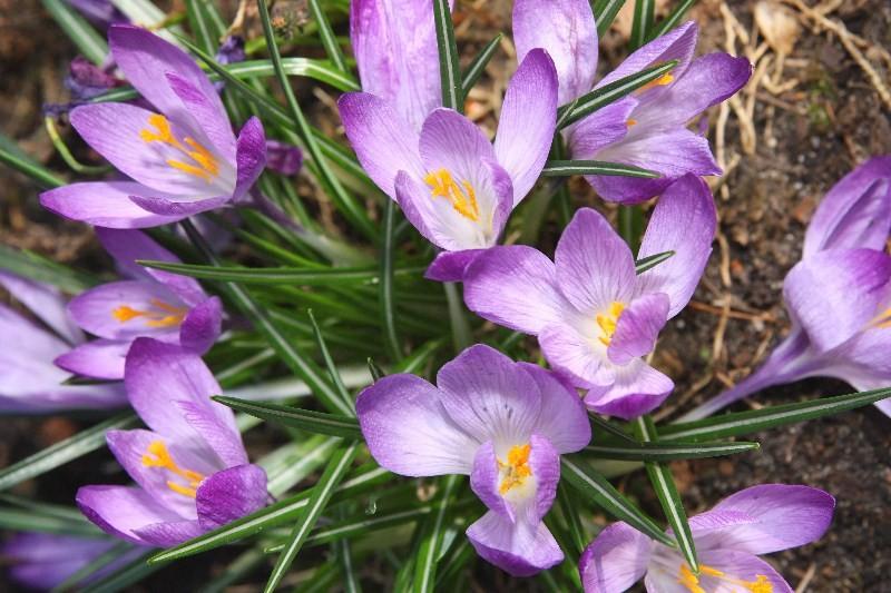 Цветы_105