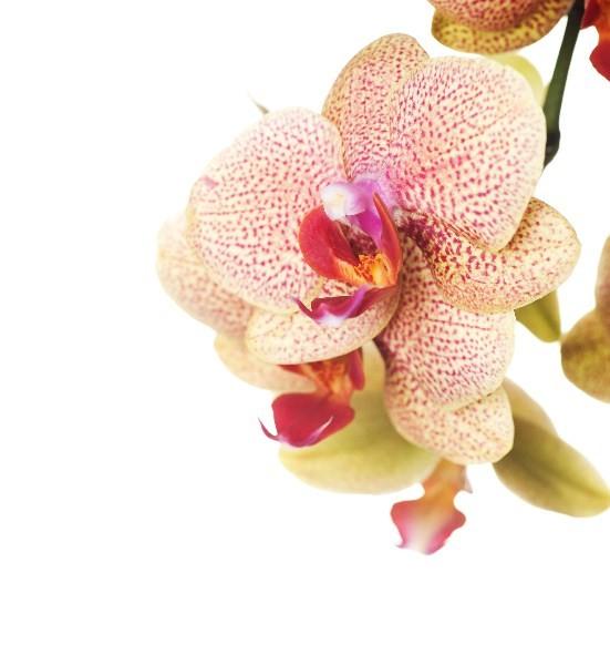 Цветы_212