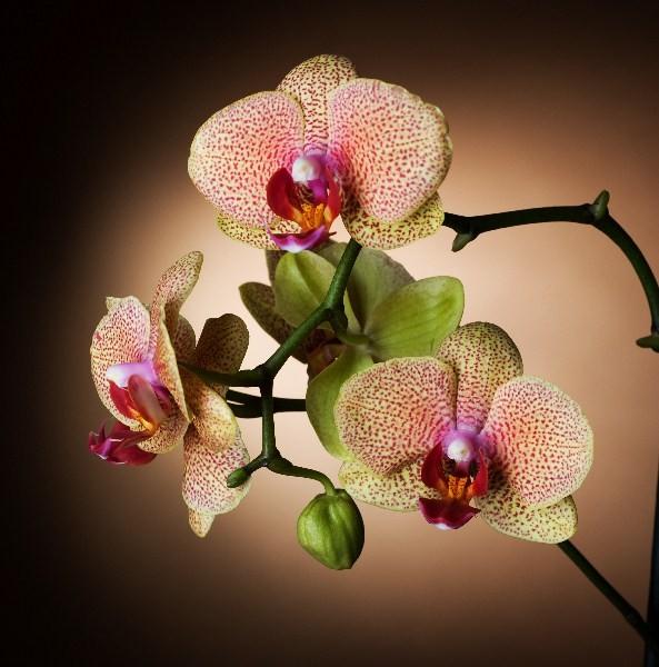 Цветы_088