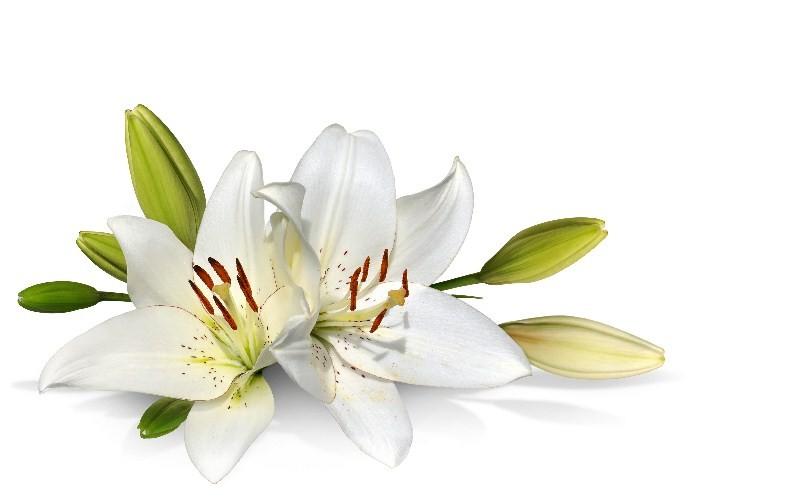 Цветы_159