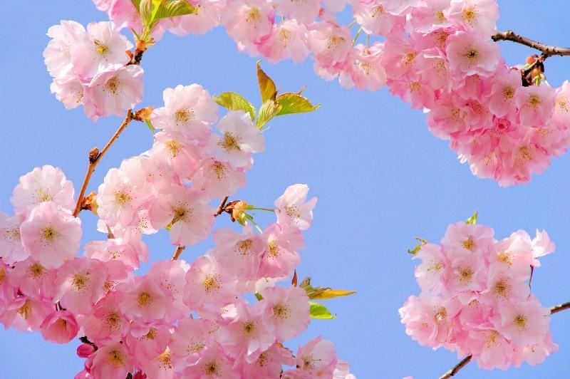 Цветы_108
