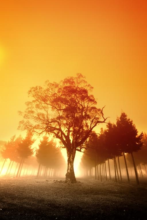 Природа_032